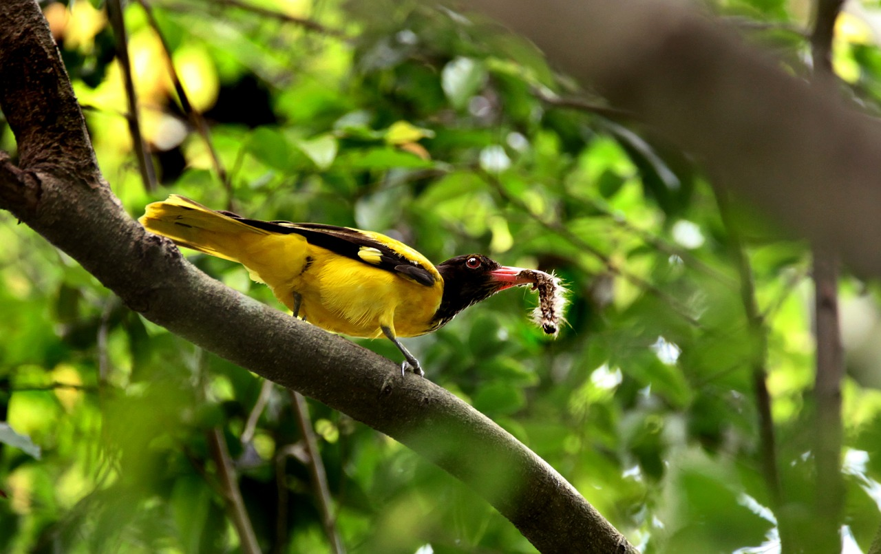 FREE goldfinch Stock Photos from PikWizard
