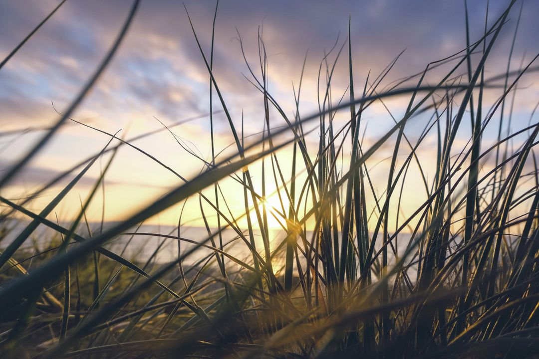 Sunrise Grass