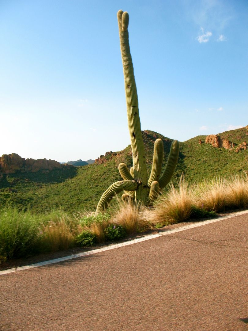 Arizona cactus nature travel