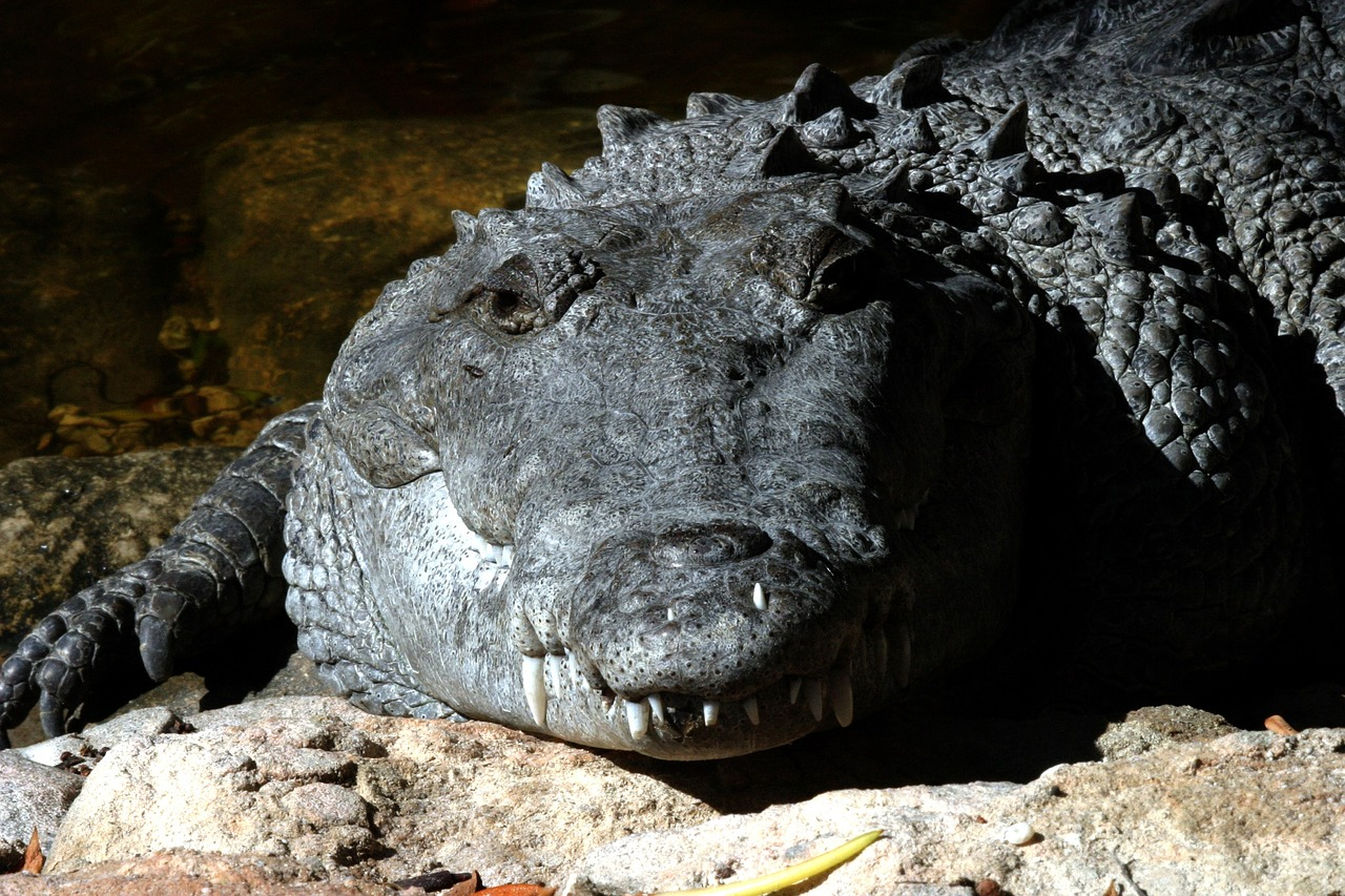 FREE alligator Stock Photos from PikWizard