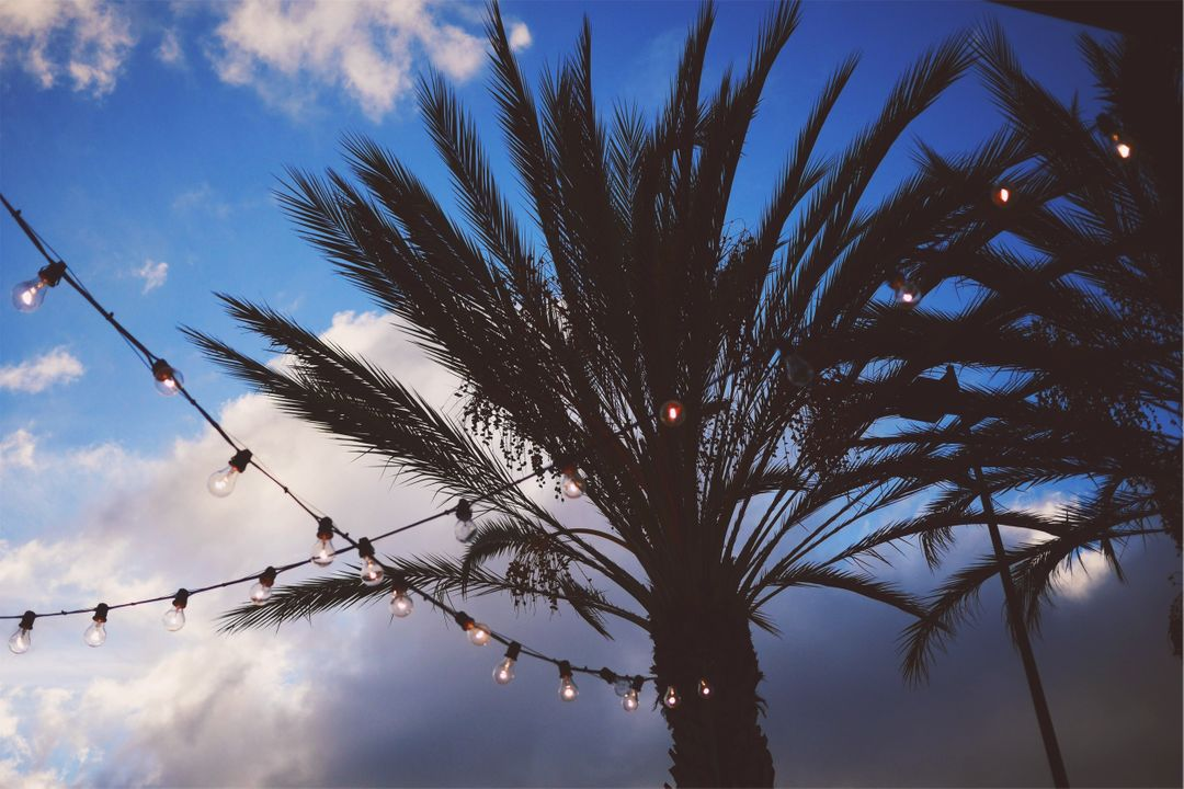 String lights palm trees sky