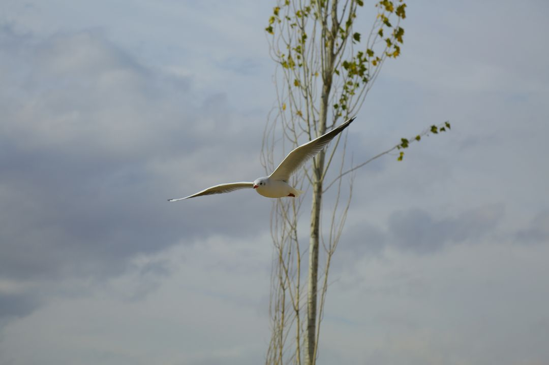 Bird flying sky white