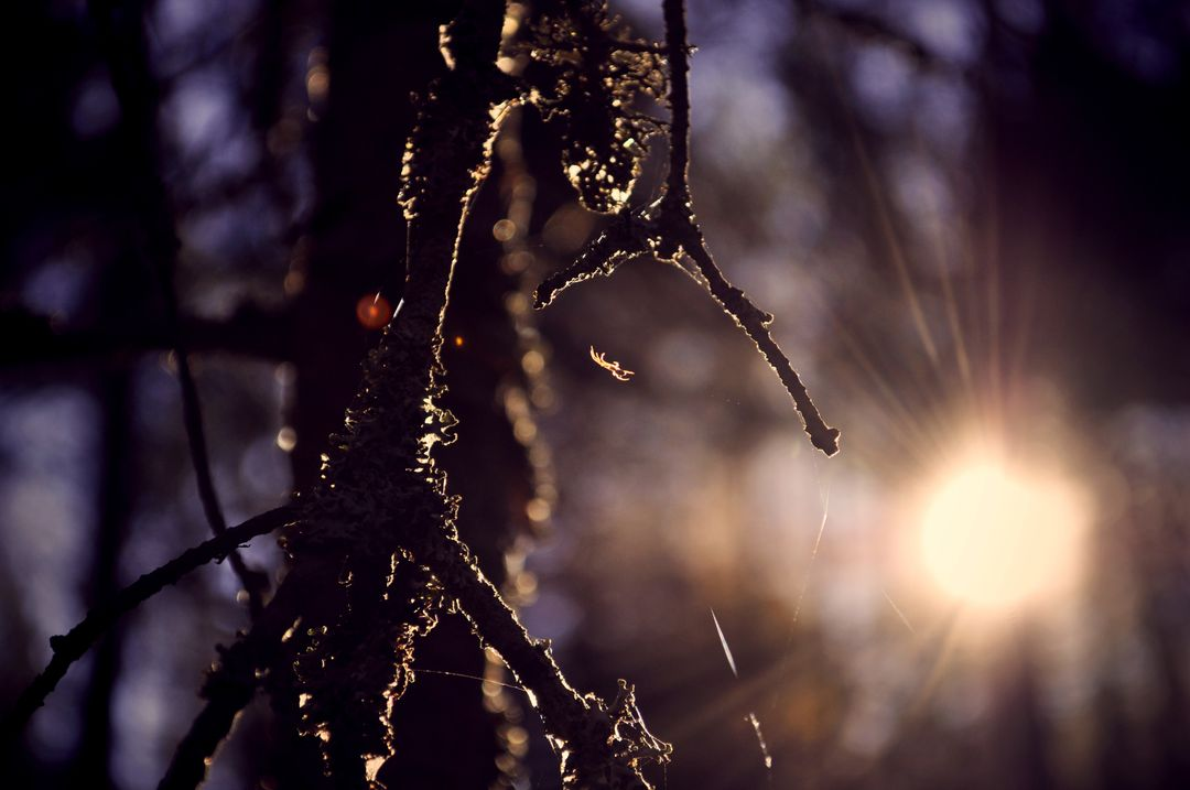 Nature spider sun web