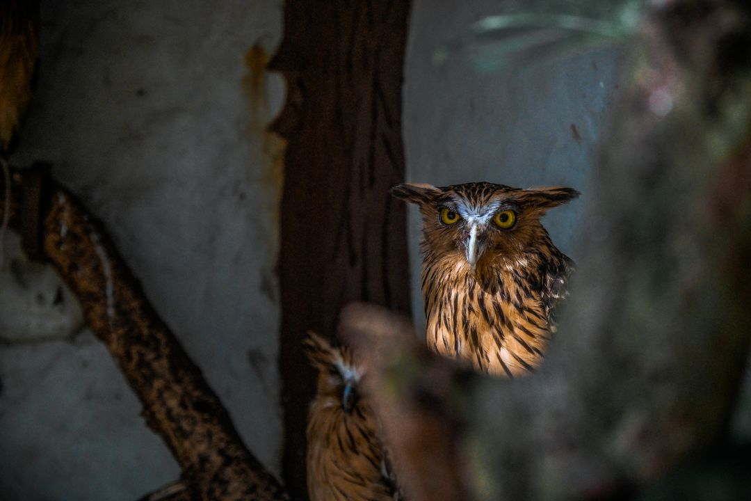 Bird animal owl wildlife