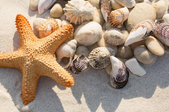 Close-up of pebbles, starfish and various sea shells on sand