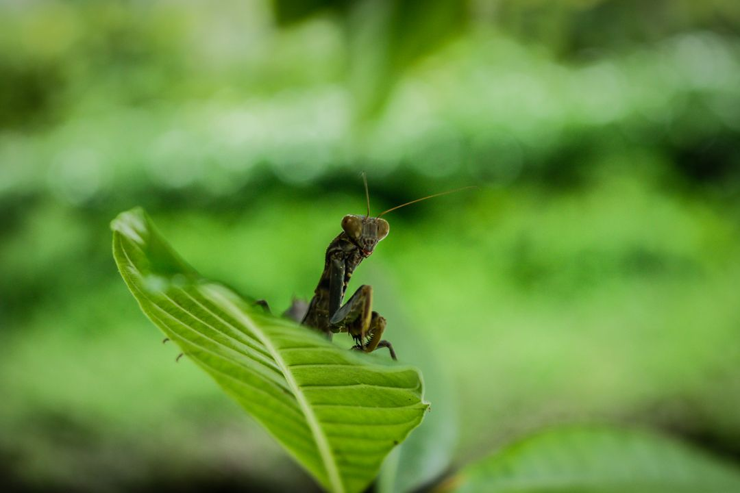 Insect Arthropod Grasshopper