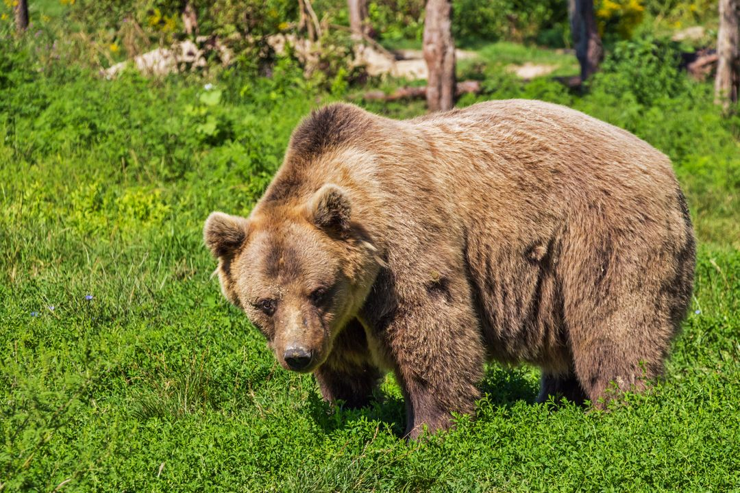Nature animal bear teddy bear