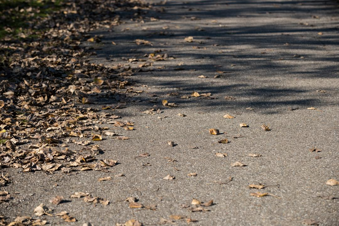 Close-up of dried leaves fallen on the road