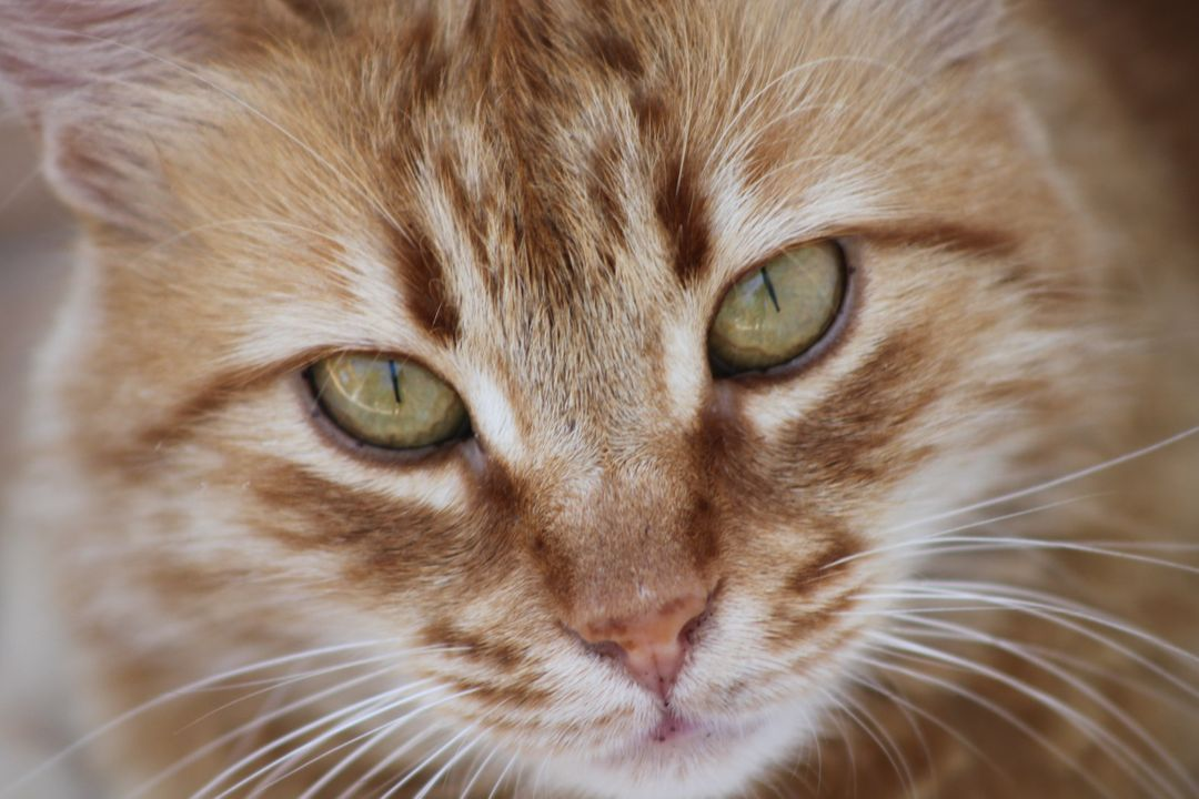 Animal portrait cat cute overview Free Stock Images from PikWizard
