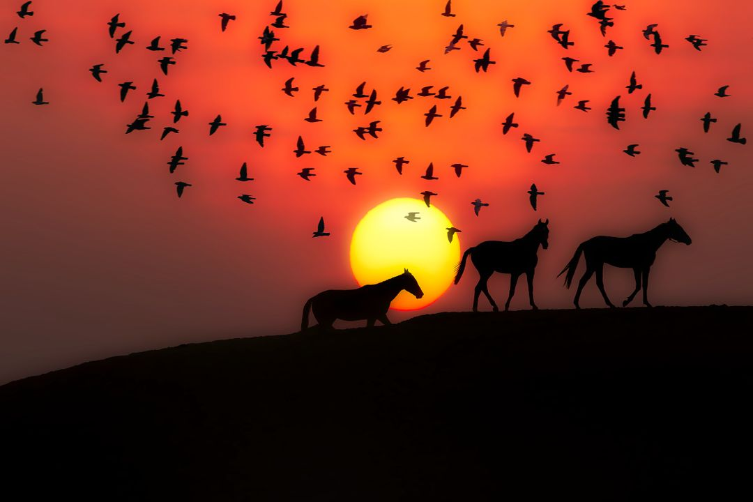 Red and Orange sunset with sillouette of horses