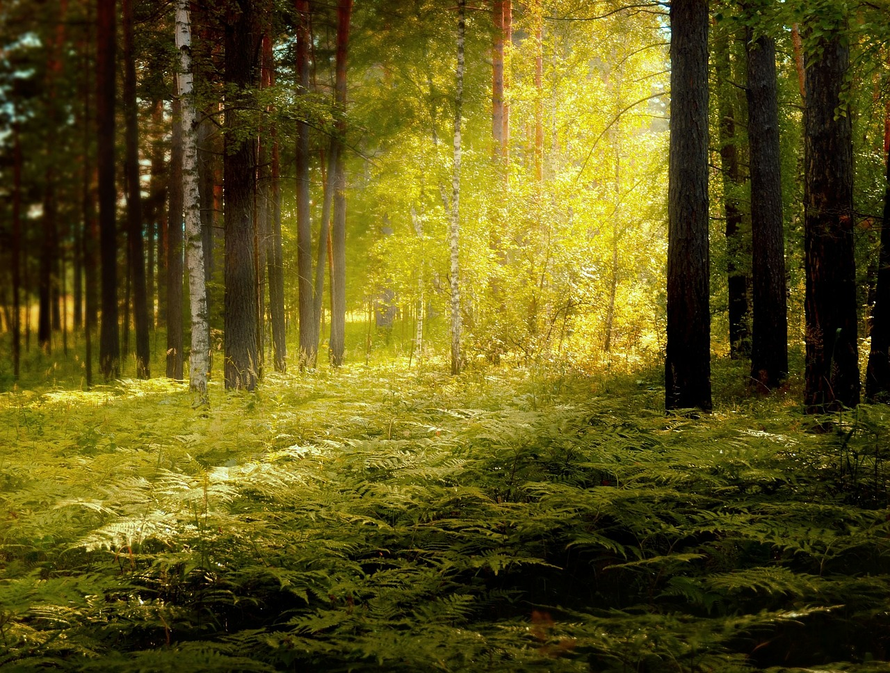 FREE forest Stock Photos from PikWizard