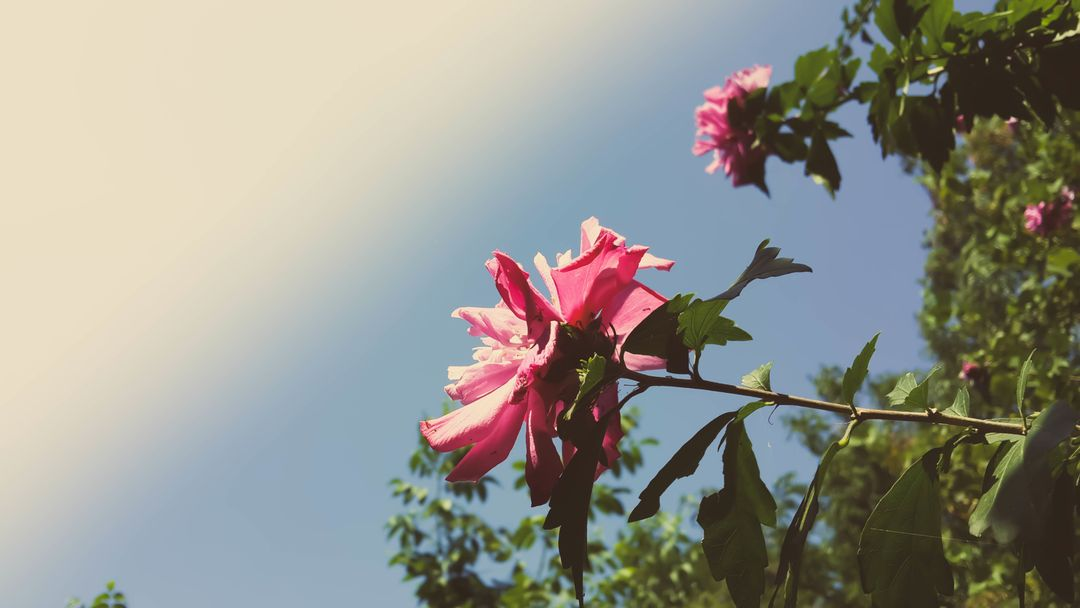 Pink Petal Flower Close Up Photography Under Blue Sky