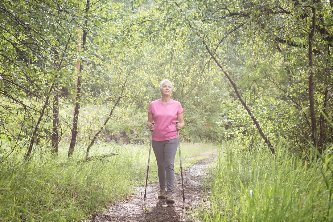 Senior woman hiker walking with hiking poles in the forest  Free Stock Images from PikWizard