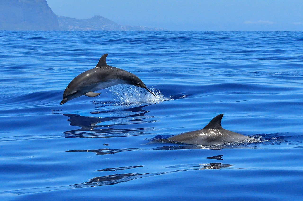 FREE dolphin Stock Photos from PikWizard