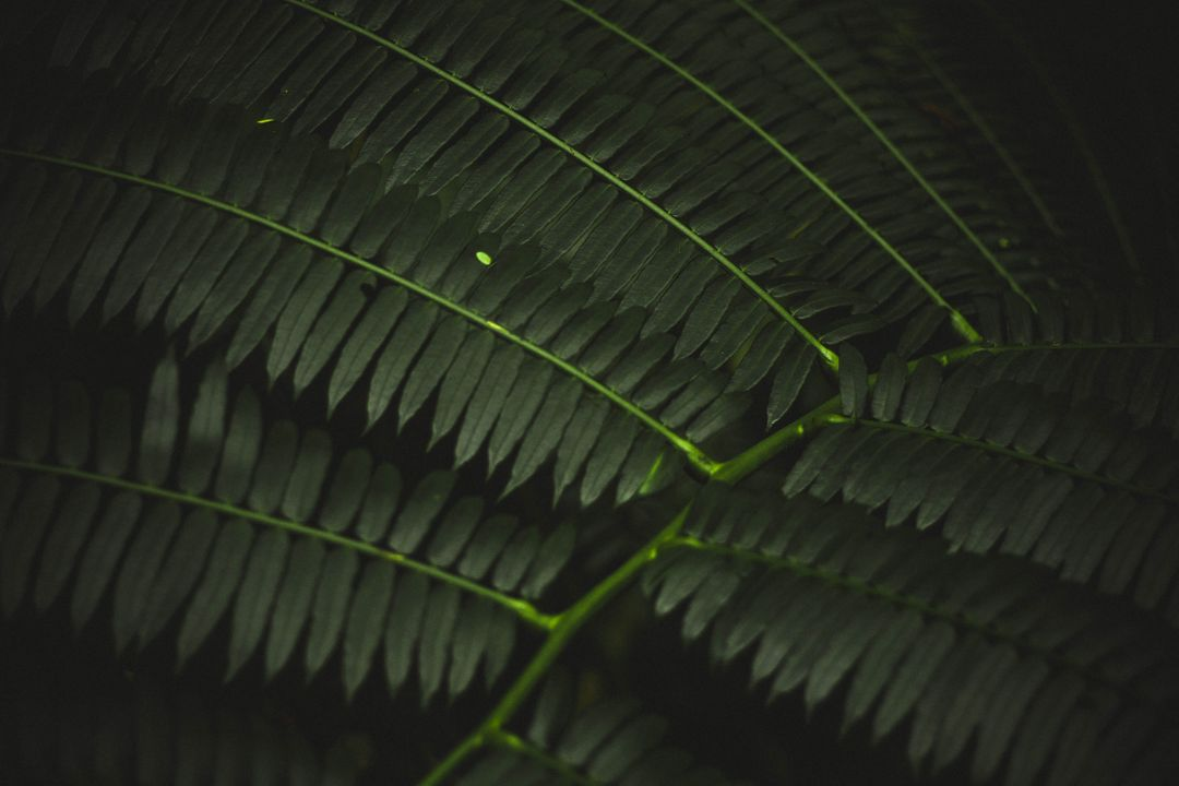 Image of a Plant in Deep Green
