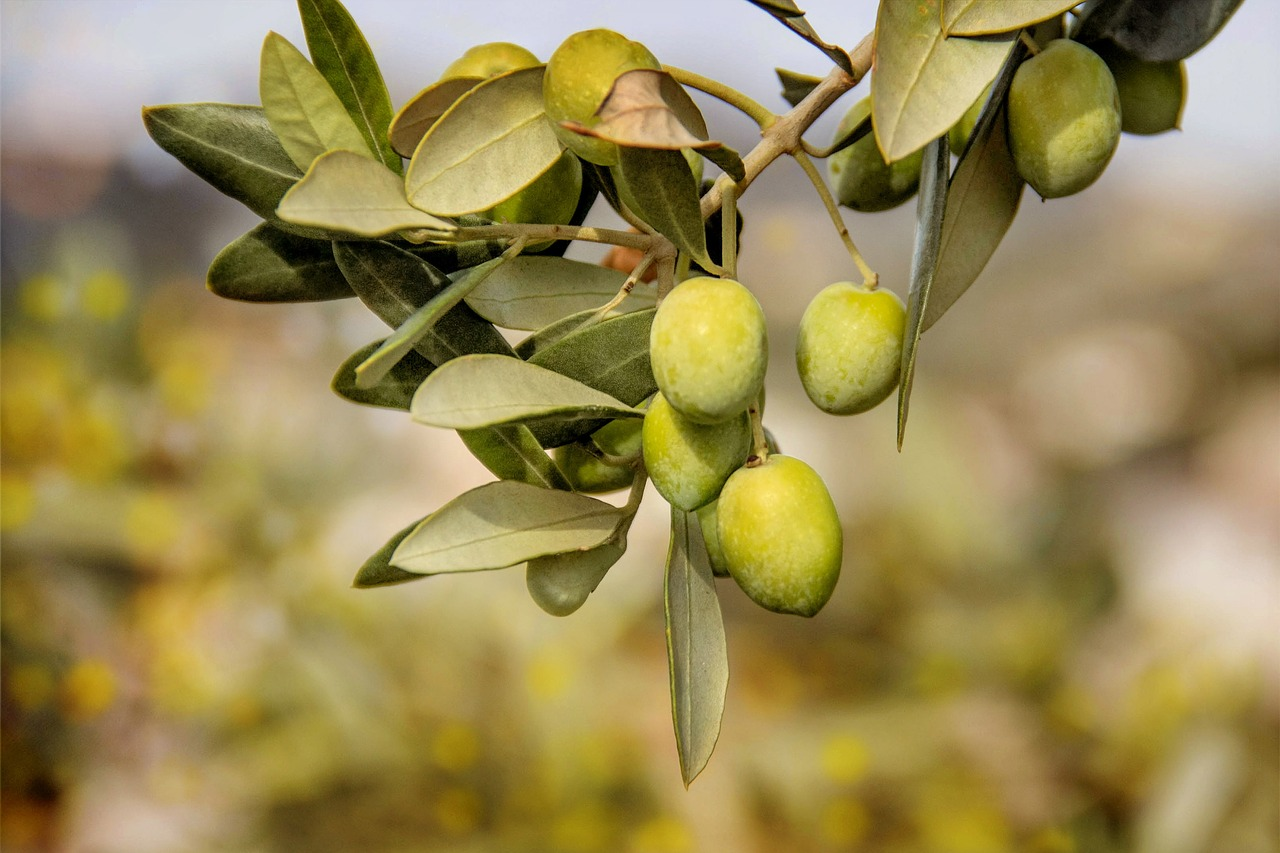 FREE olive Stock Photos from PikWizard