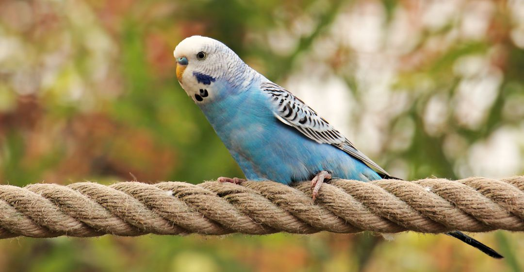 Animal animal world bird blue