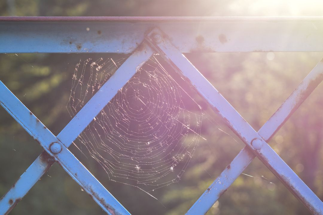 Web Spider web Trap