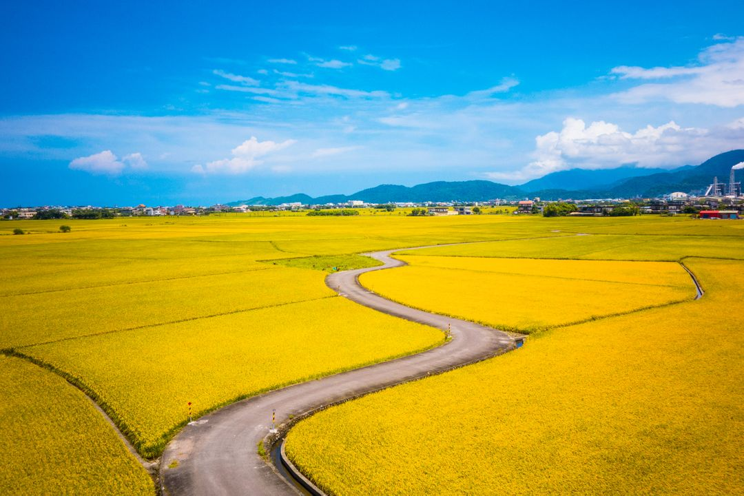 Yellow Field in the Middle of the Road during Daytime