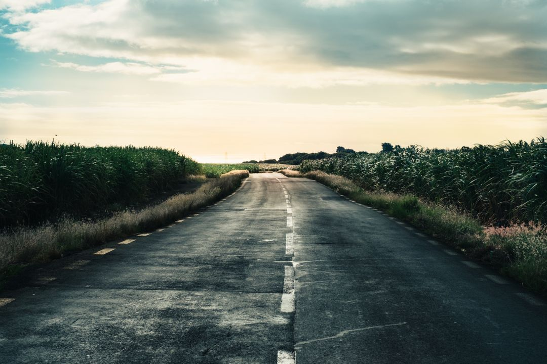 Road Landscape Way