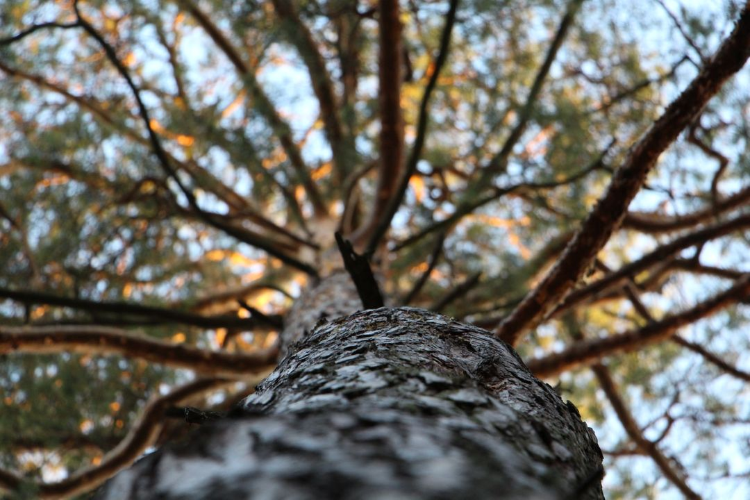 Low Angle Photography of Trees during Daytime Free Stock Images from PikWizard