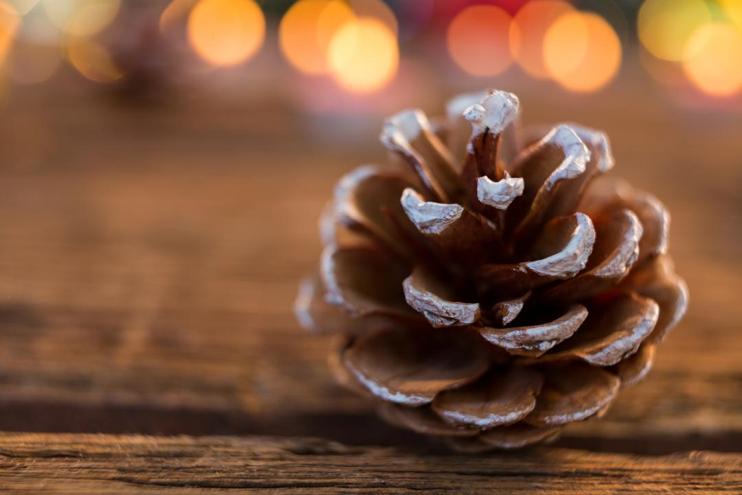 Pine cone with fake snow on wooden plank during christmas time