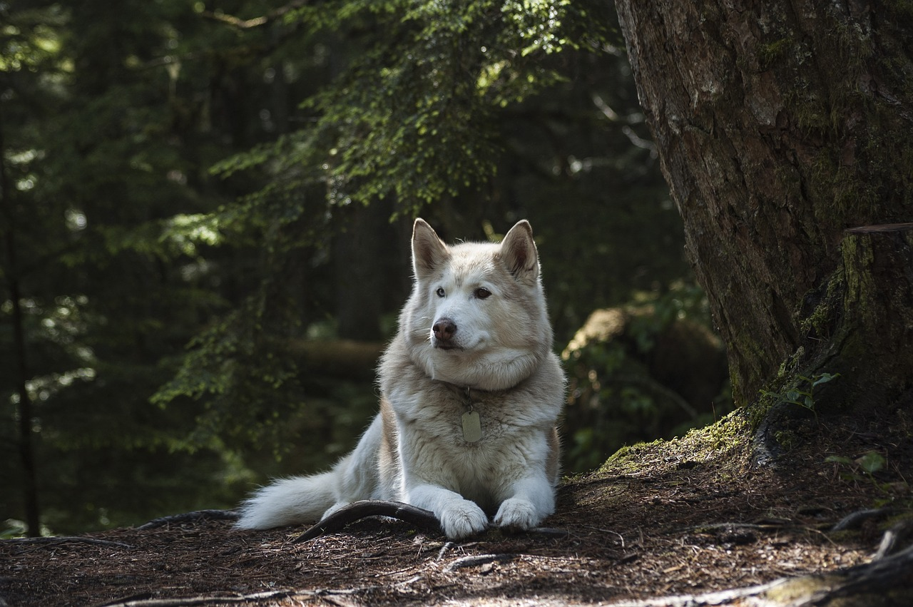 FREE wolf Stock Photos from PikWizard