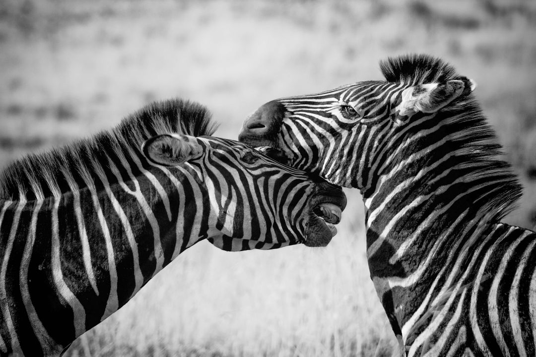 Africa animal black and white game