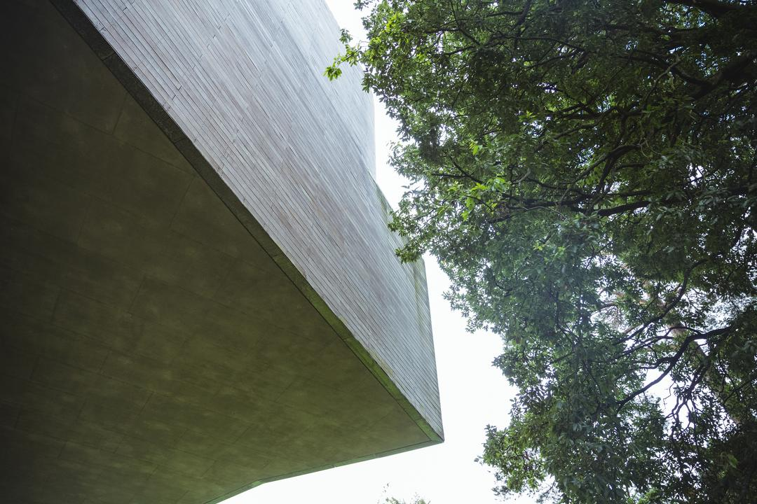 Low angle view of a tree and modern building exterior Free Stock Images from PikWizard