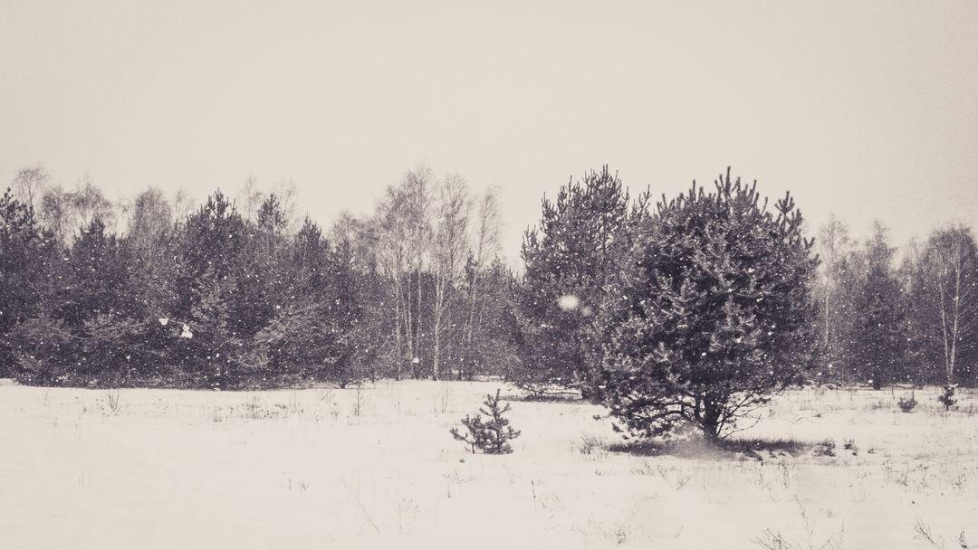Black and white cold forest grey