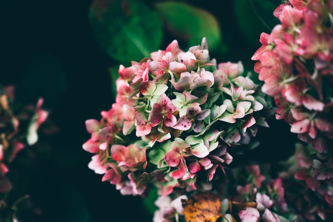 Flowers plant nature pink