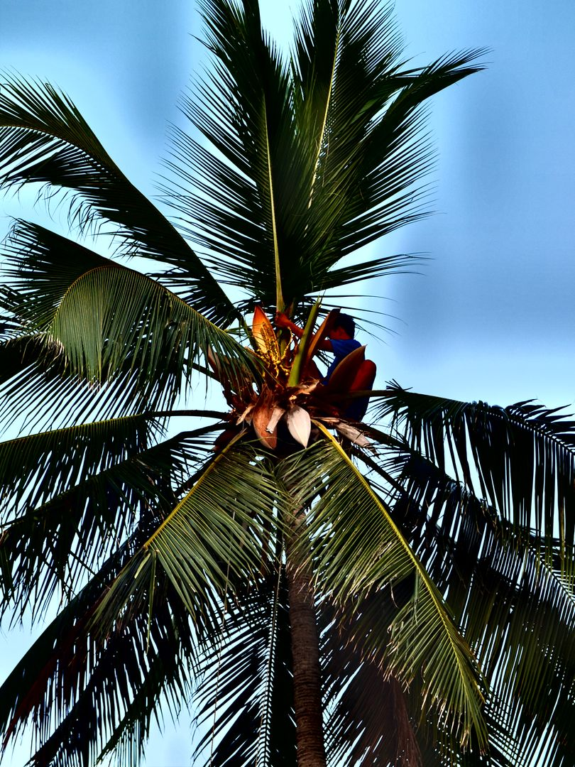 Coconut tree exotic island life koh chang