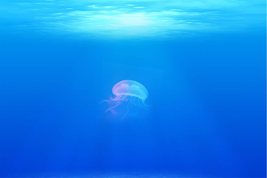 Jellyfish under water sea