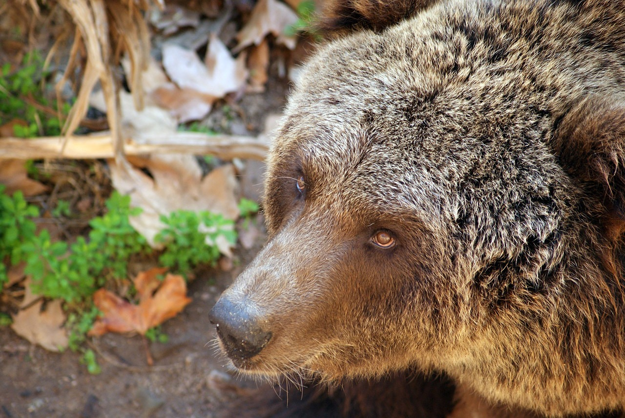 FREE bear Stock Photos from PikWizard