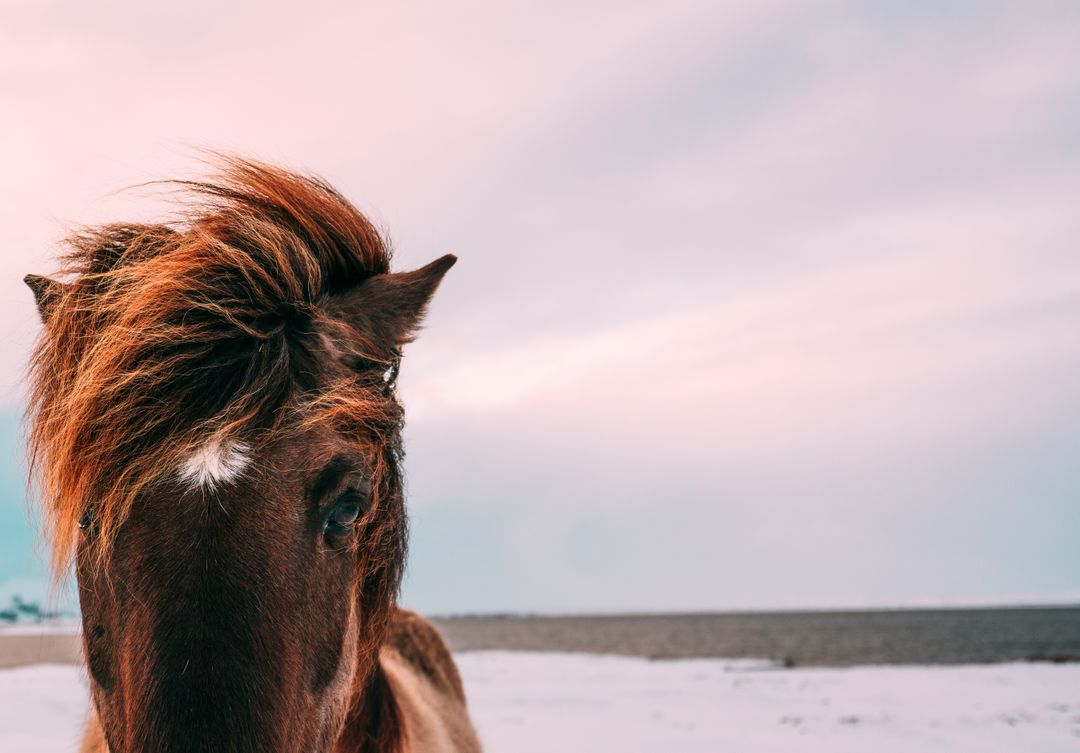 Brown Horse Standing on White Sand during Daytime
