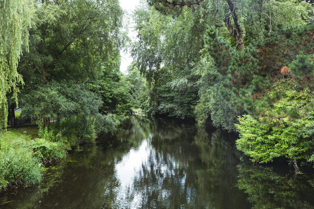 River surrounded with green trees and plants, backgrounds