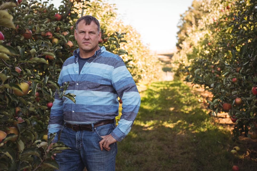 Portrait of farmer standing in apple orchard on a sunny day