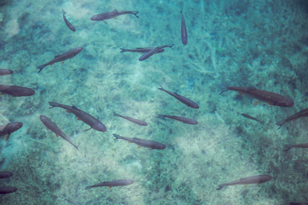 Fishes river fish clear water