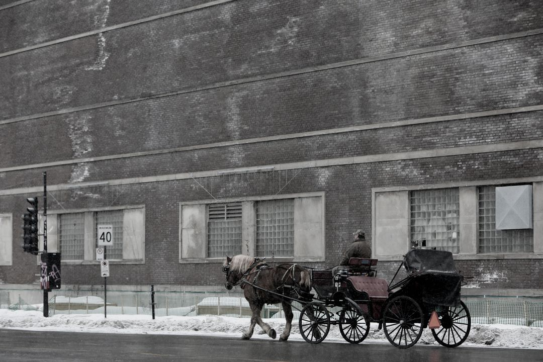 Carriage Horse-Drawn Horse