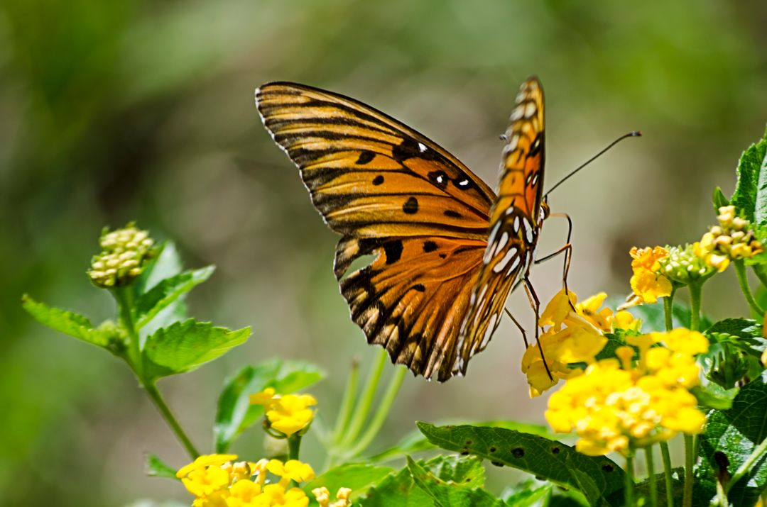 Animal nature flowers butterfly