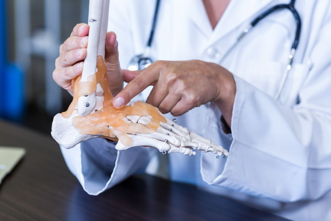 Physiotherapist holding a skeleton feet model in clinic