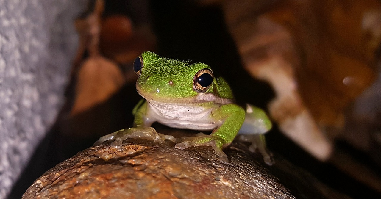 FREE amphibian Stock Photos from PikWizard
