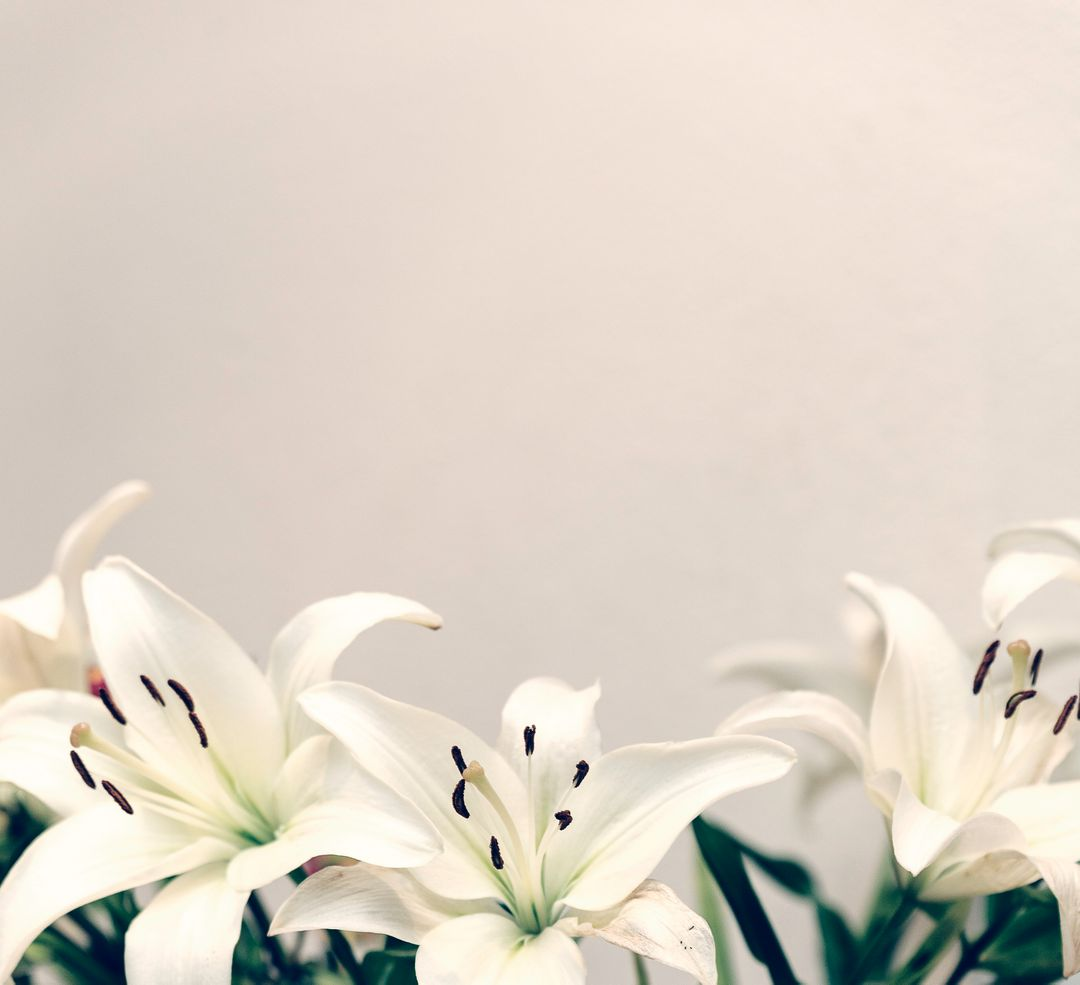 Flower Lily White