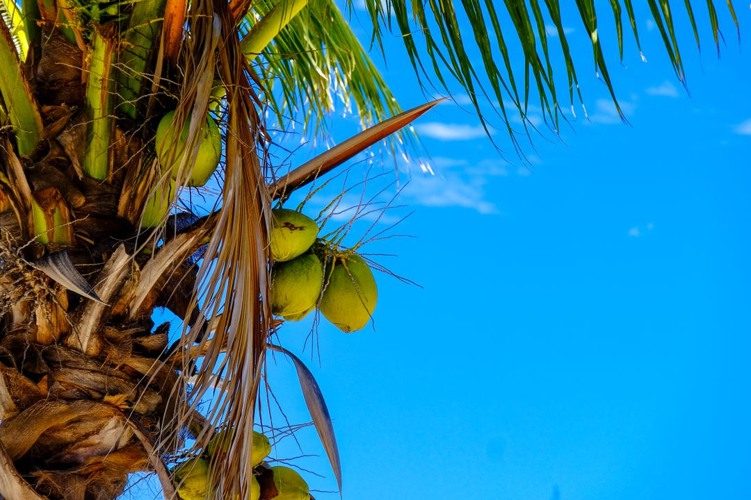Blue sky clear sky coconut coconut tree