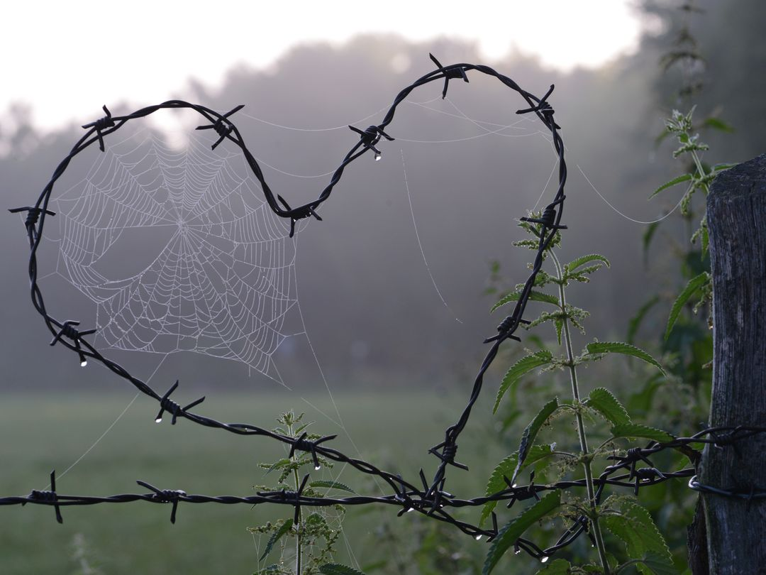 Cobweb heart love
