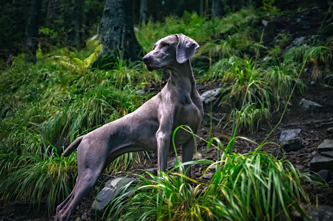 Animal breed country dog