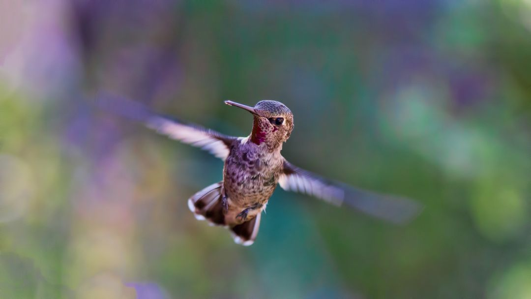 Hummingbird bird close up flying
