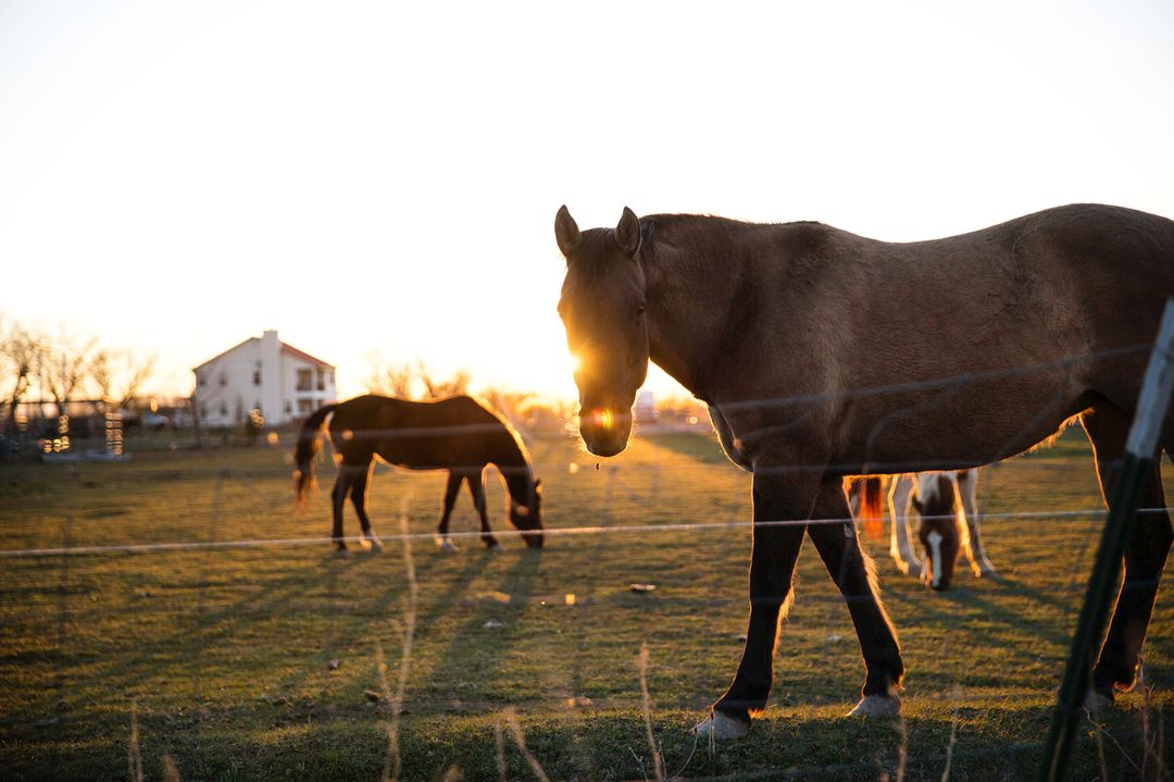 Black and Brown Horse on Green Grasses Near White House during Sunset