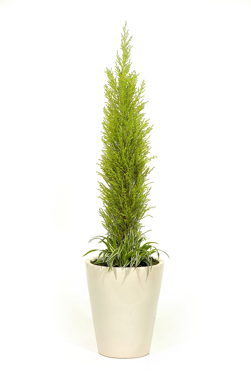 FREE plant Stock Photos from PikWizard