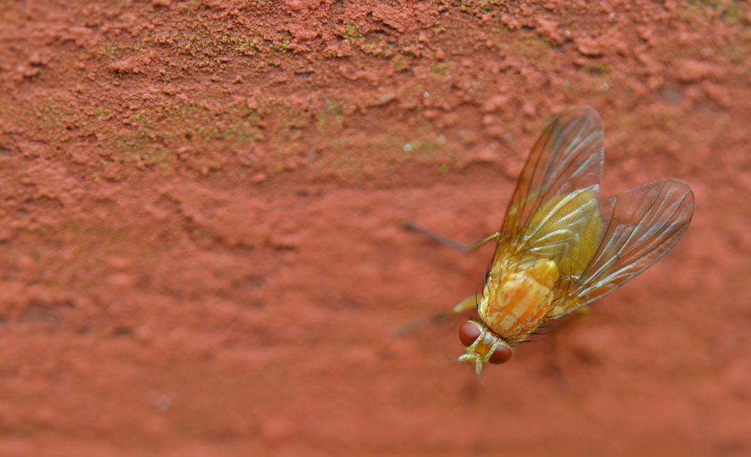 Insect macro fly bug
